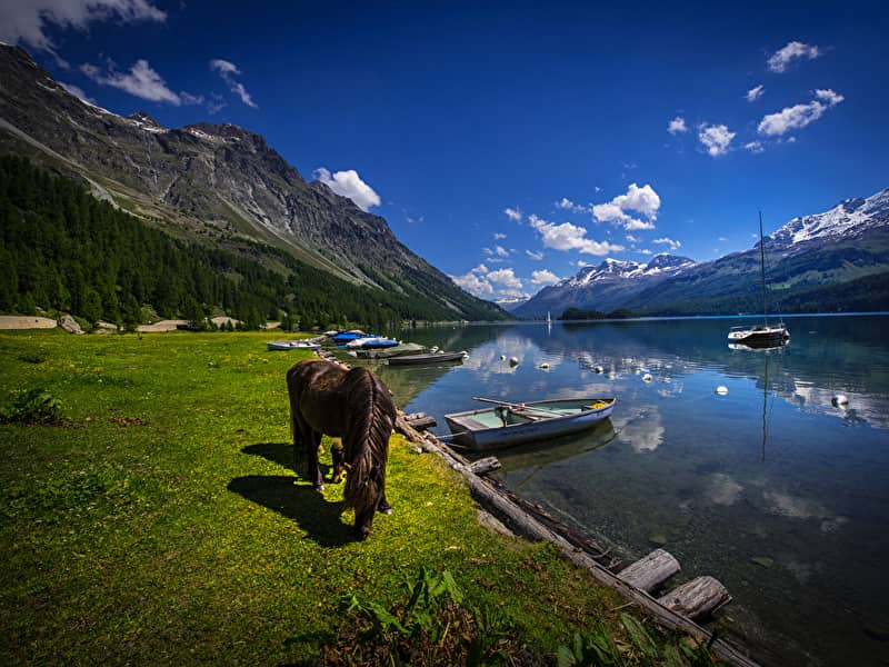 Switzerland_Lake_Mountains_Horses_Boats_Coast_Lake_514039_800x600