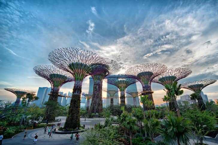 singapore_derevya1-728x486